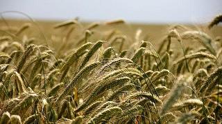 Russland und Ukraine mit Rekord-Getreideexporten